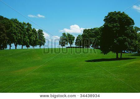 Green grass on a golf field