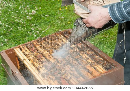 Beekeeper spraying the hives