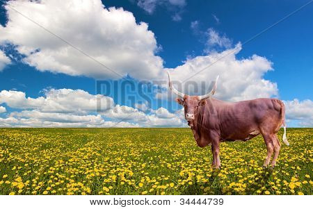 landscape with dandelion field and bull under blue sky
