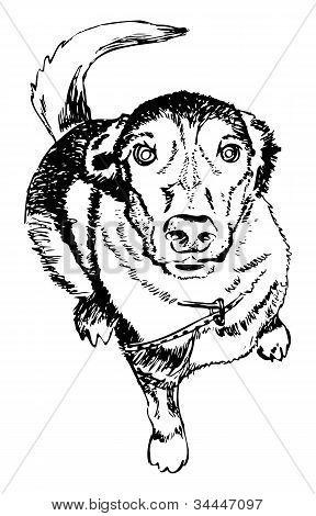 Cão, ilustração vetorial