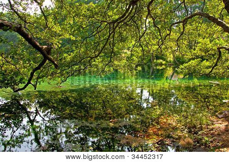 Beautiful lake and green trees