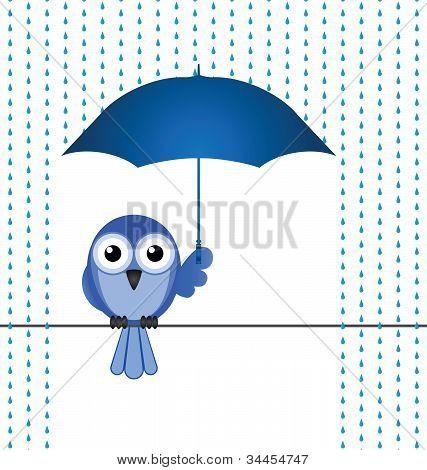 Vogel-Regen