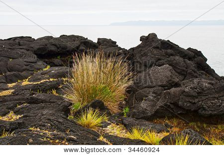 Vegetation On Stones