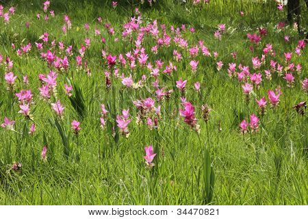 Thai  forest   flower (Forest of Flowers )