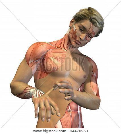 Anatomy Revealed