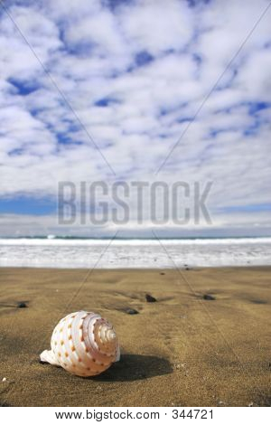 Seashell View