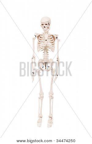 Esqueleto humano em detalhes isolado no branco