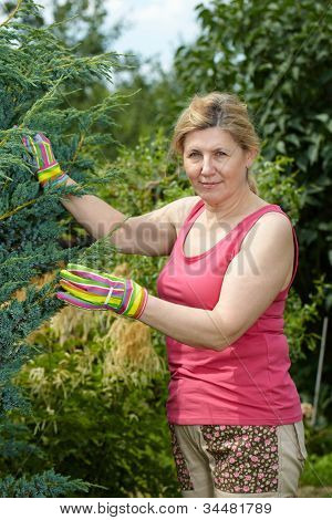 Mature woman works in her garden, wear pink top and colorful gloves