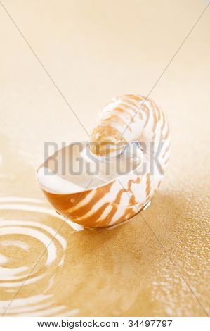 Nautilus shell full of water in sea sand. Concept of seawater Pollution in the world.  This pictures belongs to the Sea Things series in my portfolio