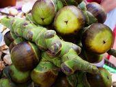 Asian Palmyra Palm ,sugar Palm Toddy Palm Fruit. poster
