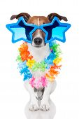 stock photo of queer  - gay dog with glasses and a lei - JPG