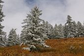 Mountains, Winter Snowy Forest. poster
