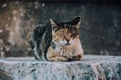 Street Cat. Striped Little Kitten On The Ruins.turkish Cat.photo Of Cat With Place For Text. Cat On poster