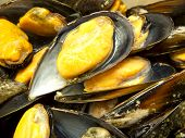 pic of convection  - Mussels steamed in a convection oven at - JPG