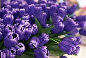 picture of green leaves  - image of 	purple tulip flowers arranged for decorated in house - JPG