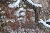 Branch In The Winter Park In Siberia poster