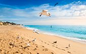 Seagulls Flying On Beach In Albufeira Resort Village At Sunset. Wide Sandy Beach Praia De Albufeira  poster