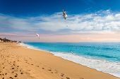 Seagulls Flying On Beach In Albufeira Resort Village, Popular Touristic Destination In Algarve, Port poster