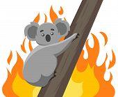 Fires In The Habitats Of Koalas. Ecological Disaster In Australia. Vector Modern Design Illustration poster