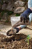 Gardener Blending Organic Fertiliser Humic Granules With Soil, Enriching Soil For Plants To Grow Opt poster