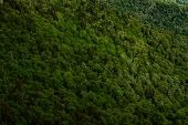 Thick Tree Top Forest Below Mountain Top poster