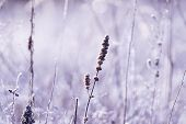 Close Up Of Meadow In Winter Sunrise Nature Background. Nature Background Of Meadow Flowers In Sunri poster
