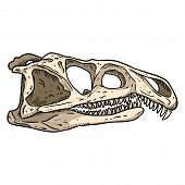 Archosaurus Rossicus Fossilized Skull Hand Drawn Sketch Image. Carnivorous Archosauriform Reptile Di poster