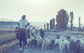 Gauchos ahd herd of goats in Patagonia mountains, Argentina poster