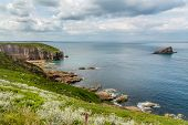 Wild Flowers Covering The Cliffs Of Picturesque Cape Frehel Coastline With Amas Du Cap Island View,  poster