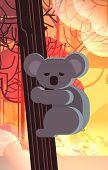 Endangered Koala Bear On Tree Animals Dying In Wildfire Bush Fire Development Dry Woods Burning Tree poster