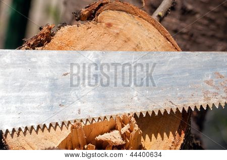 The Old Saw Against The Cut Tree