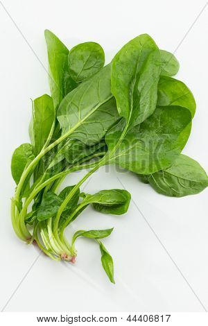 Fresh spinach, stem and leaves