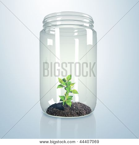 Green sprout and soil inside a glass jar