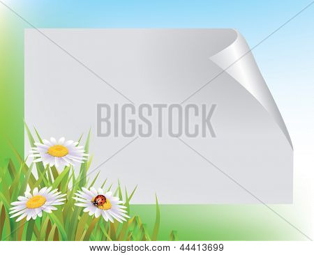 Blank sheet of paper and a ladybug on Camomile