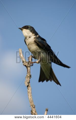 Small Bird Against Blue Sky Sitting On A Twig