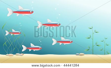 Aquarium Background With Cardinal Tetra Fish