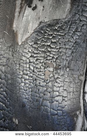 Texture of charred wood.