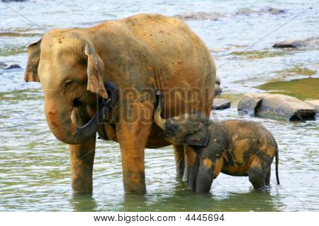 Happy Elephants Family