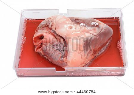 heart in plastic tray isolated on white