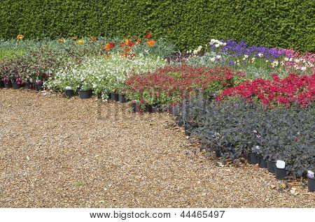 English Flower Beds In Garden