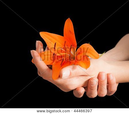 Woman Hands And Lily Flower