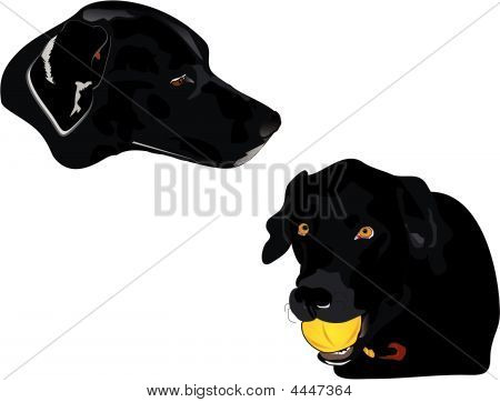 Black Labrador Profile  Illustration