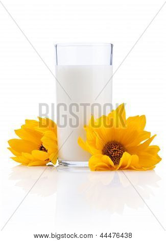 Glass Of Fresh Milk And Two Yellow Flowers Isolated On White Background