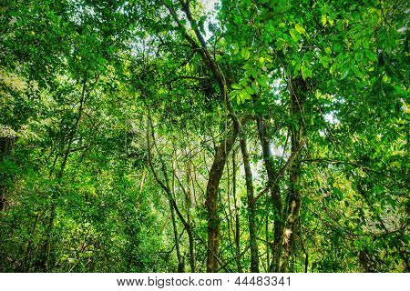 Sacred African Rainforest