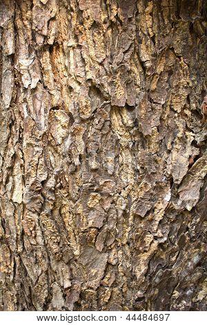 Texture Of Tree Bark