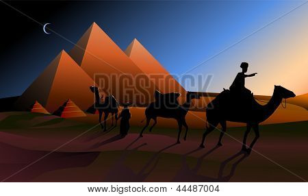 Bedouin Caravan Camels Against Over Pyramids.
