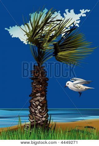 Seagull And Palm On The Sea-vector Illustration