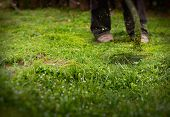 picture of grass-cutter  - Gardener is using a petrol brush cutter to mow long grass and flowers - JPG