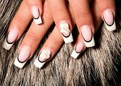 image of french manicure  - The French manicure nails and chamomile flowers - JPG