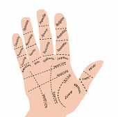 picture of palm-reading  - Open hand with sections divided according to some palm reading beliefs - JPG